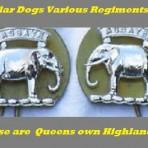 Collar Dogs